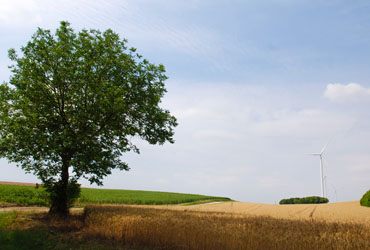 Paysage campagne